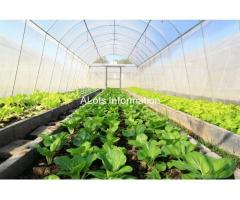 Agriculture Film and Sheet